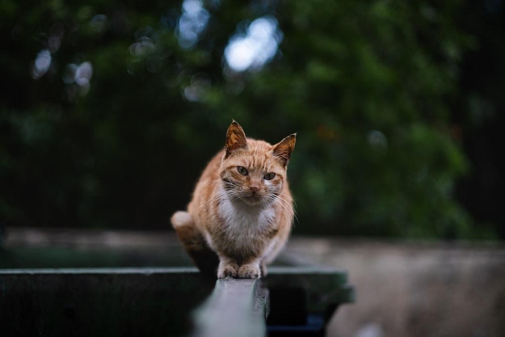 orange tabby cat on black plastic container