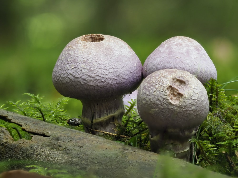 white and brown mushrooms on brown wooden log