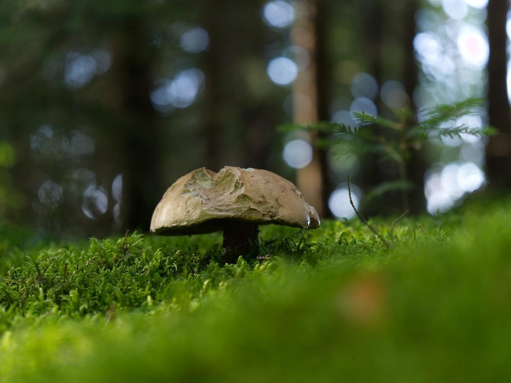 brown mushroom on green grass during daytime