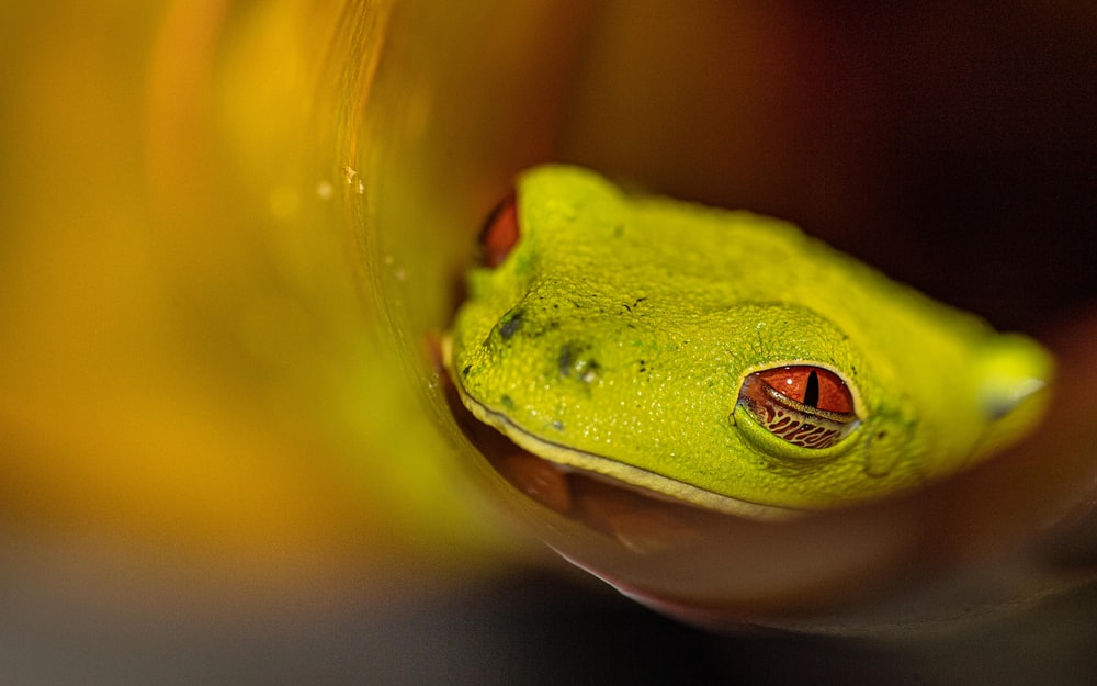 green frog in water in close up photography