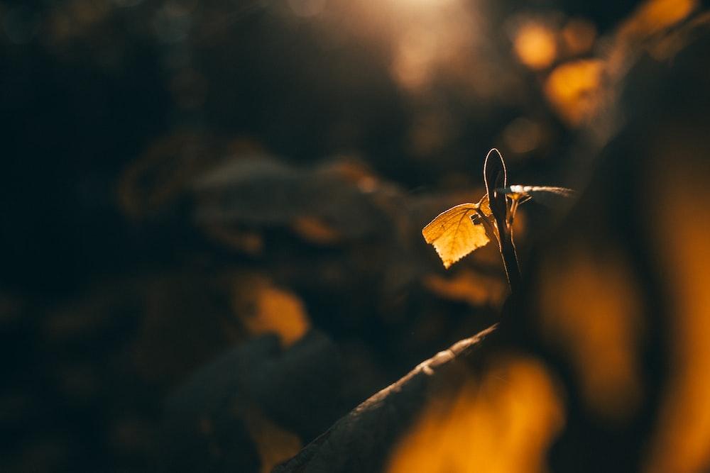 yellow leaf in tilt shift lens