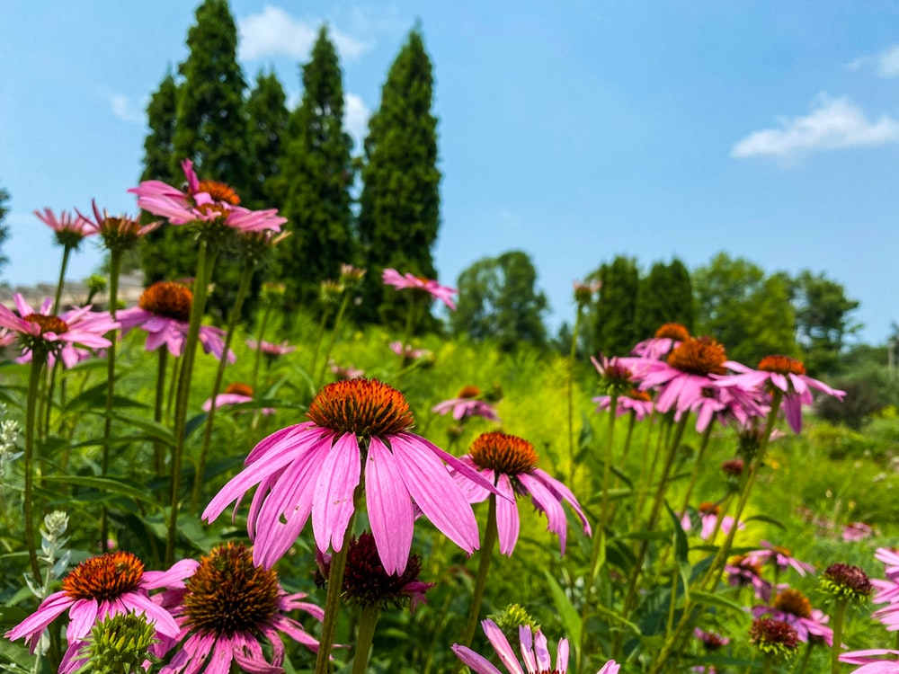 pink and yellow flowers under blue sky during daytime