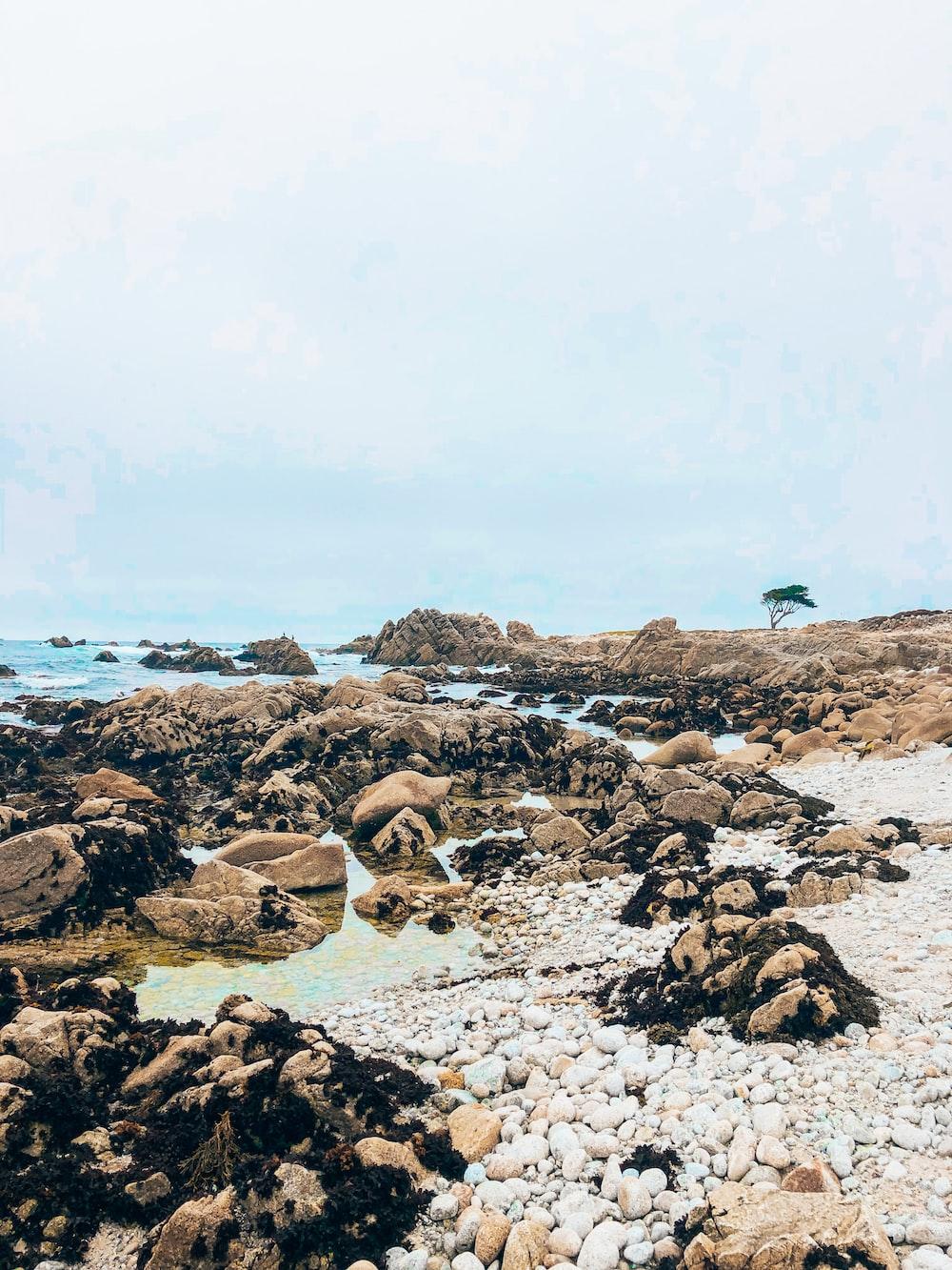 brown rocks on beach during daytime