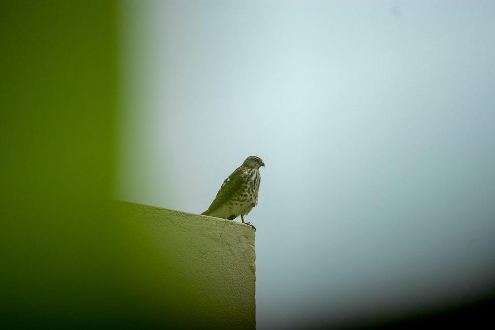 brown bird on white concrete wall