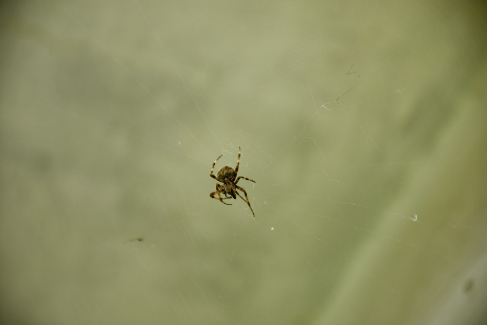 brown spider on white surface