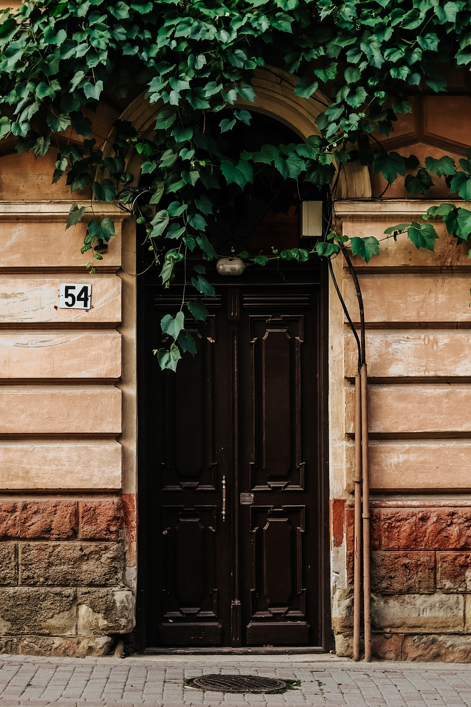 brown wooden door with green vines