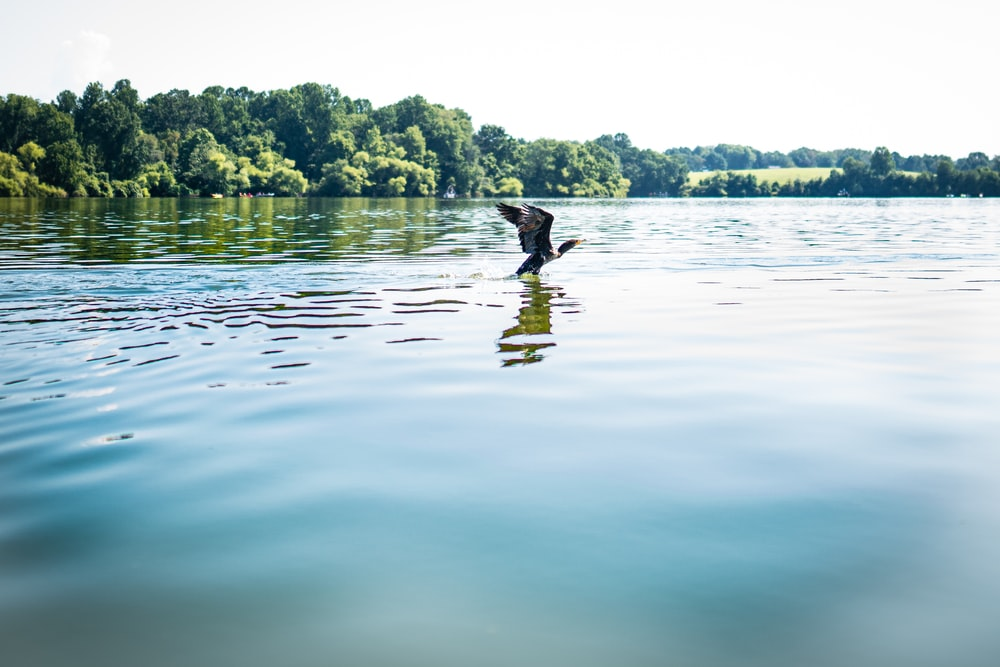person in black jacket and black pants standing on body of water during daytime