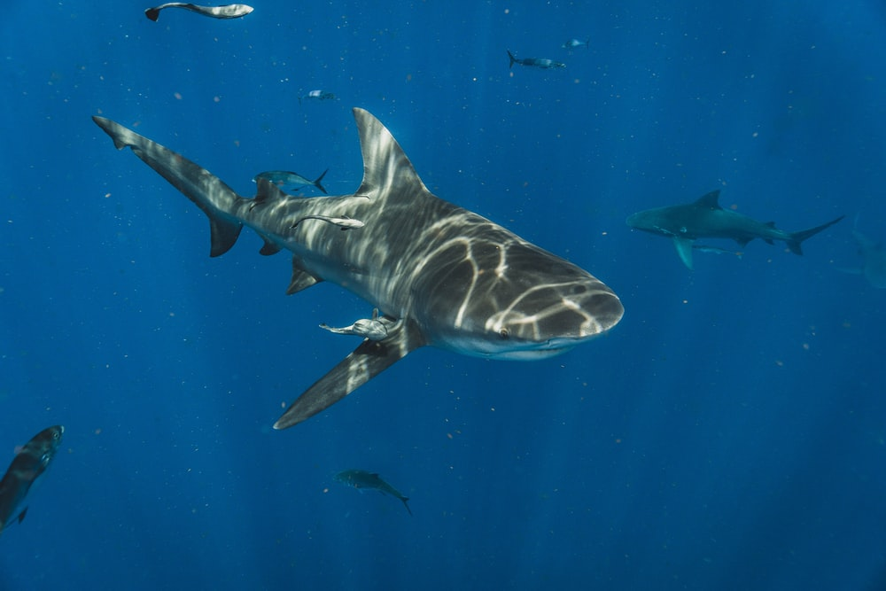 grey shark in water during daytime