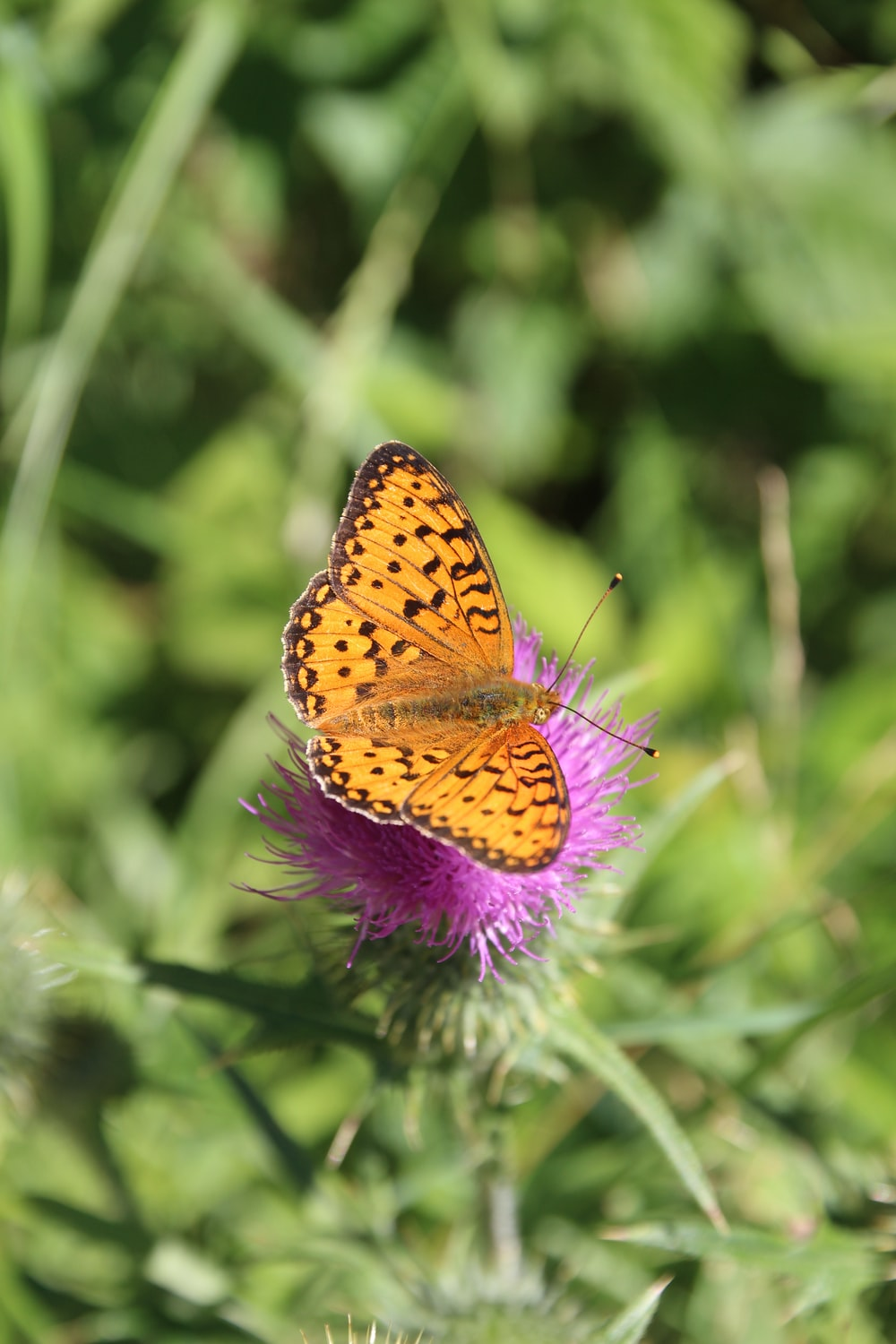 yellow and black butterfly on purple flower during daytime