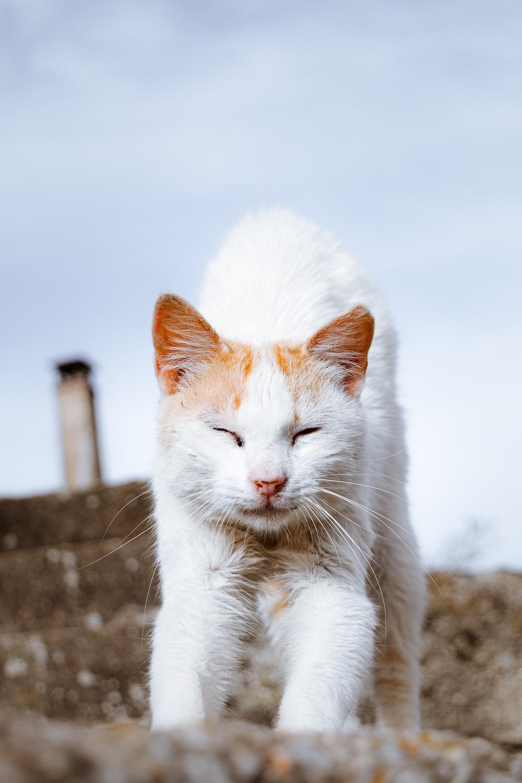 white and orange cat on black concrete surface