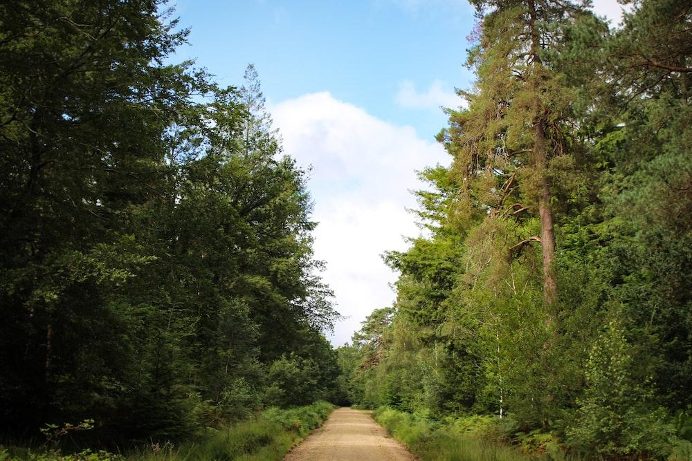brown dirt road between green trees under blue sky during daytime