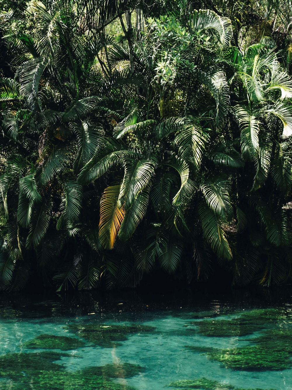 green palm tree near body of water during daytime