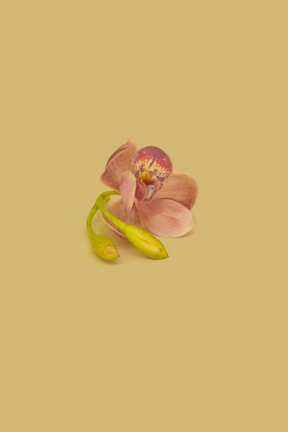pink and yellow flower with green leaves