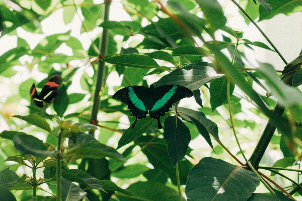 green and black butterfly perched on green leaf
