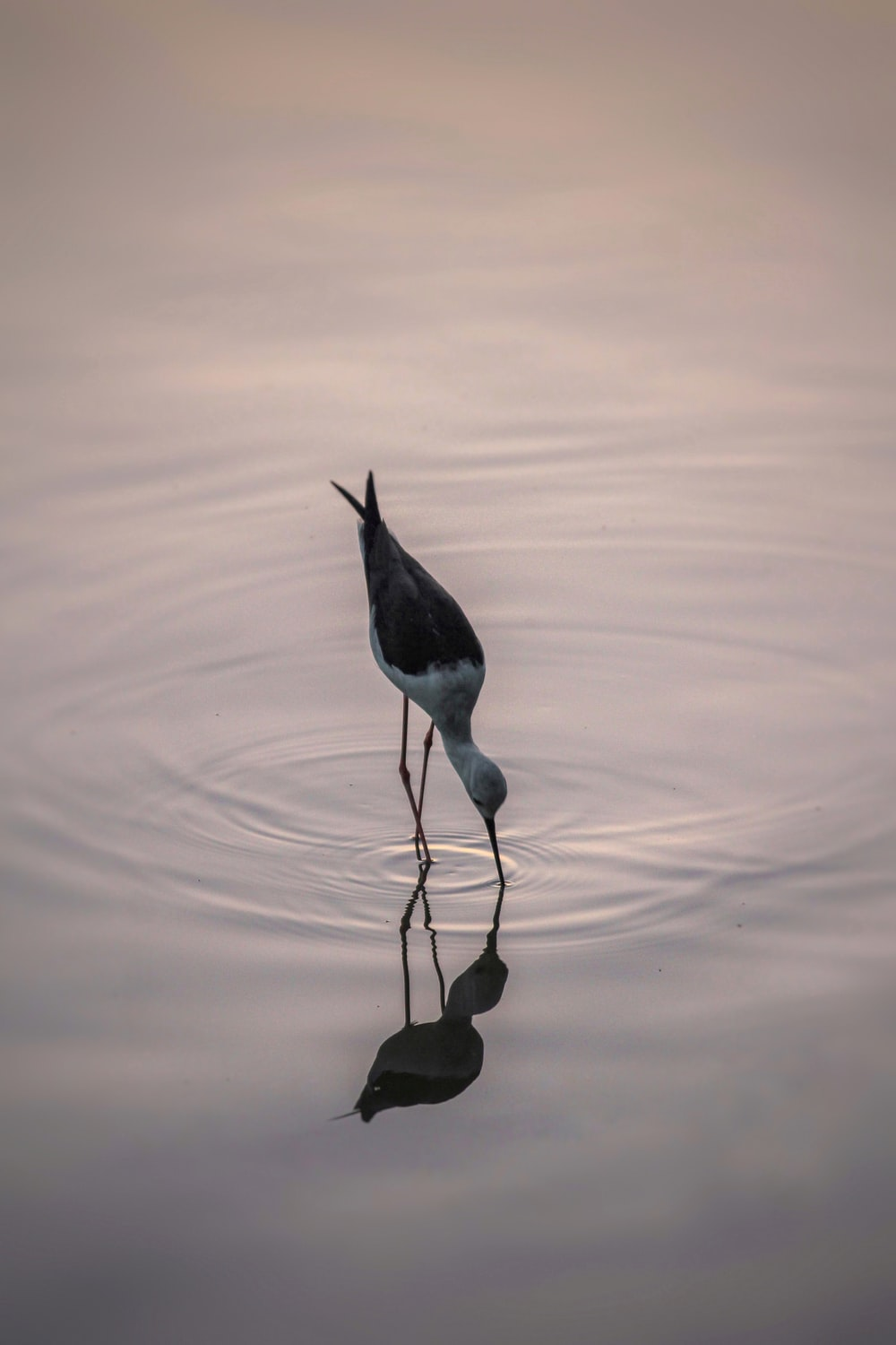 black and white bird on water