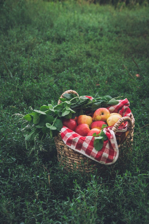 orange fruits on brown woven basket on green grass during daytime