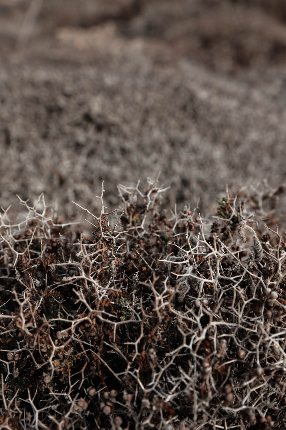 brown dried leaves on brown field during daytime