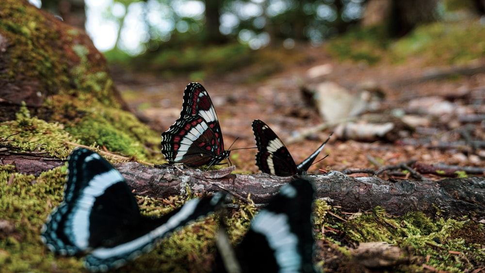 black white and red butterfly on green moss during daytime