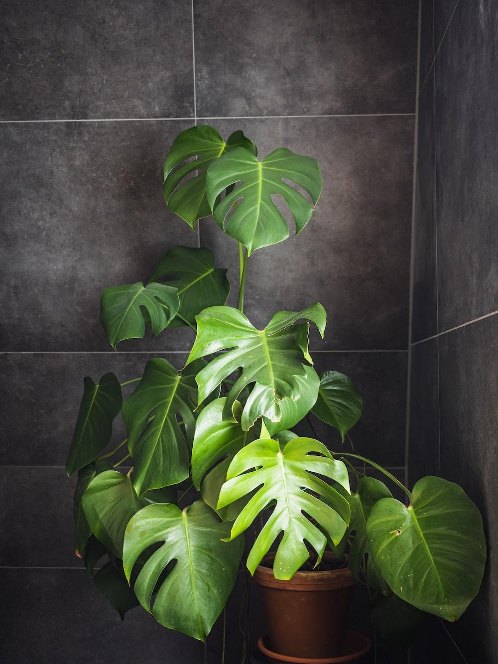 green leaves on black ceramic tiles