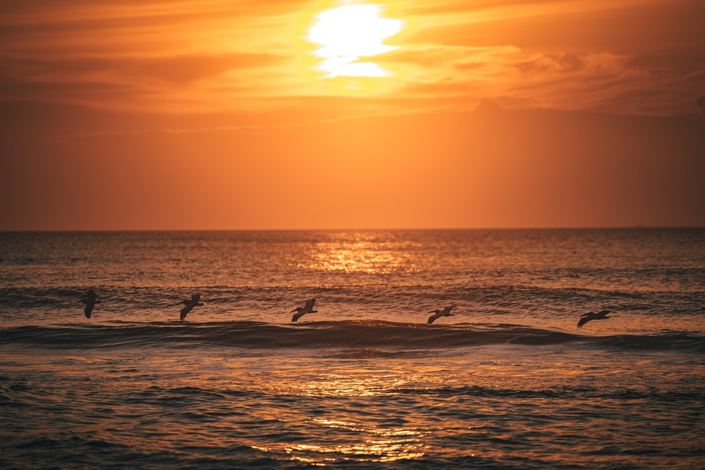 silhouette of people surfing on sea during sunset
