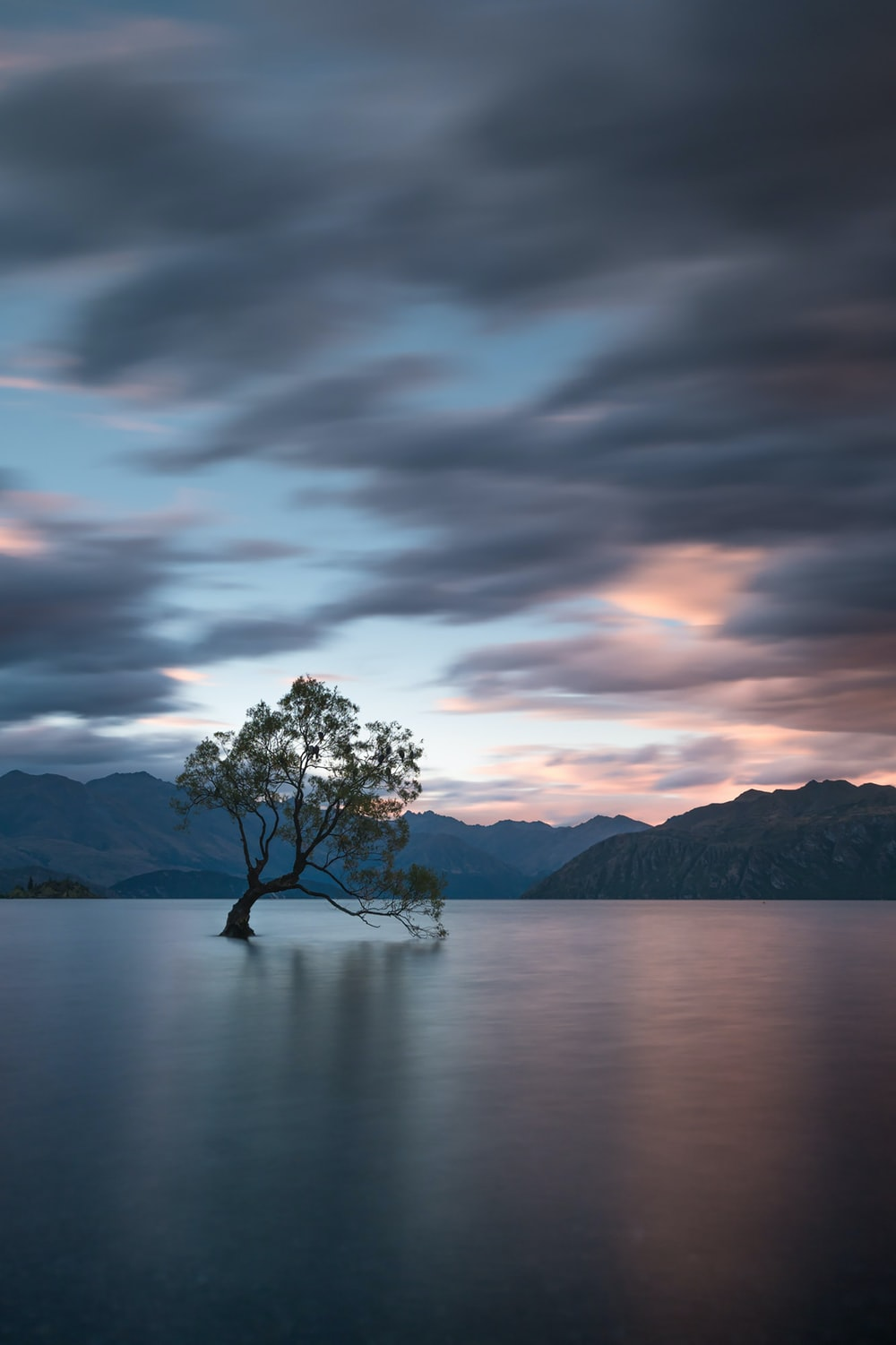 tree on body of water under cloudy sky during daytime