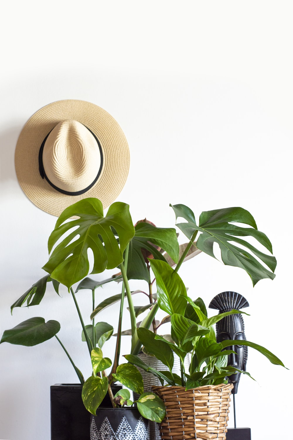 brown straw hat on green plant