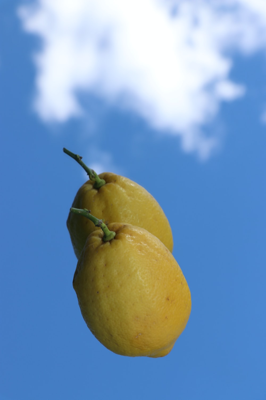 yellow lemon fruit under blue sky during daytime