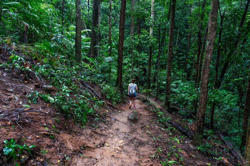 man in blue shirt and black shorts walking on dirt road in the woods during daytime