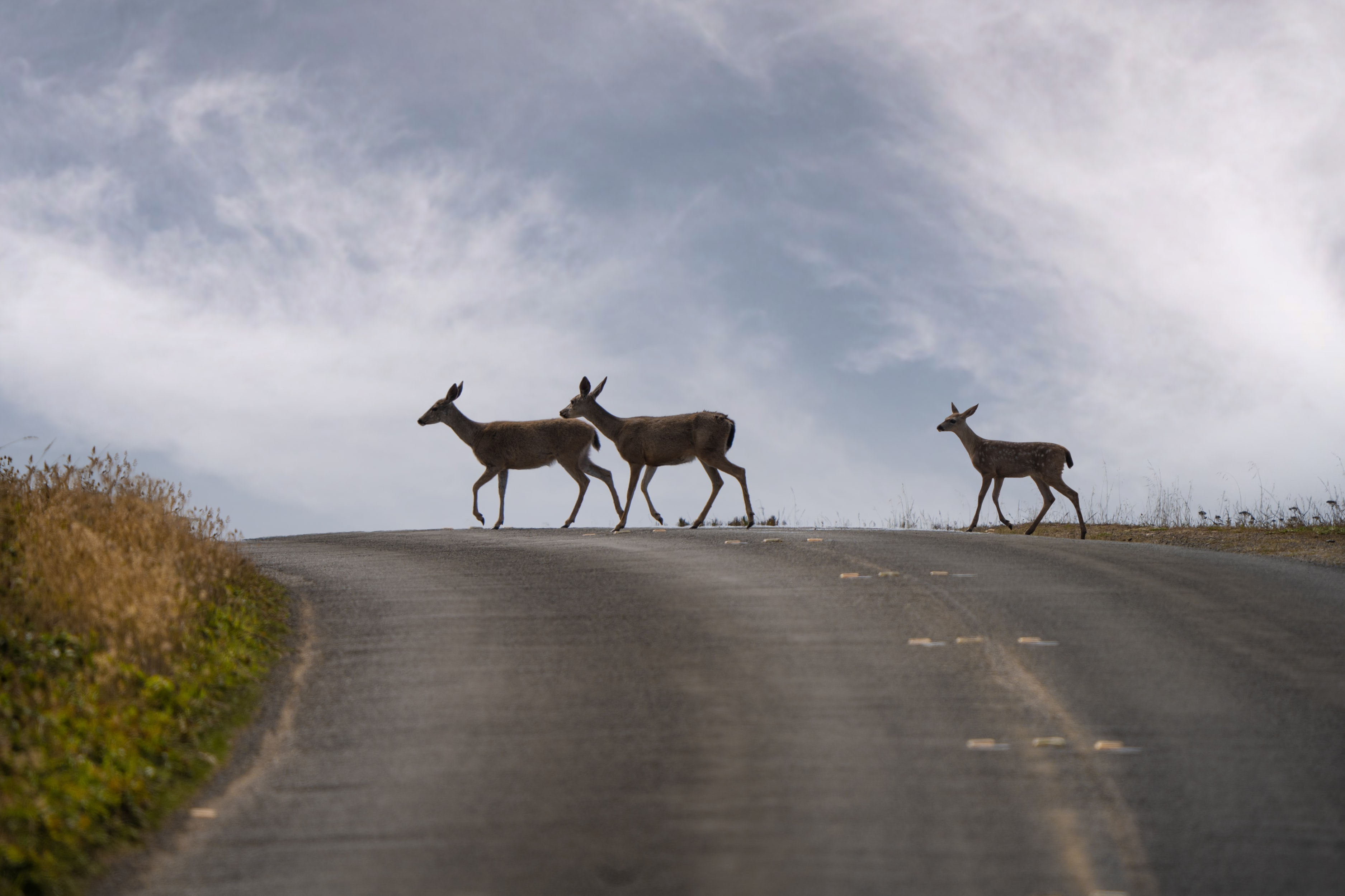 Chronic Wasting Disease May Soon Spread to Humans, Warns CDC