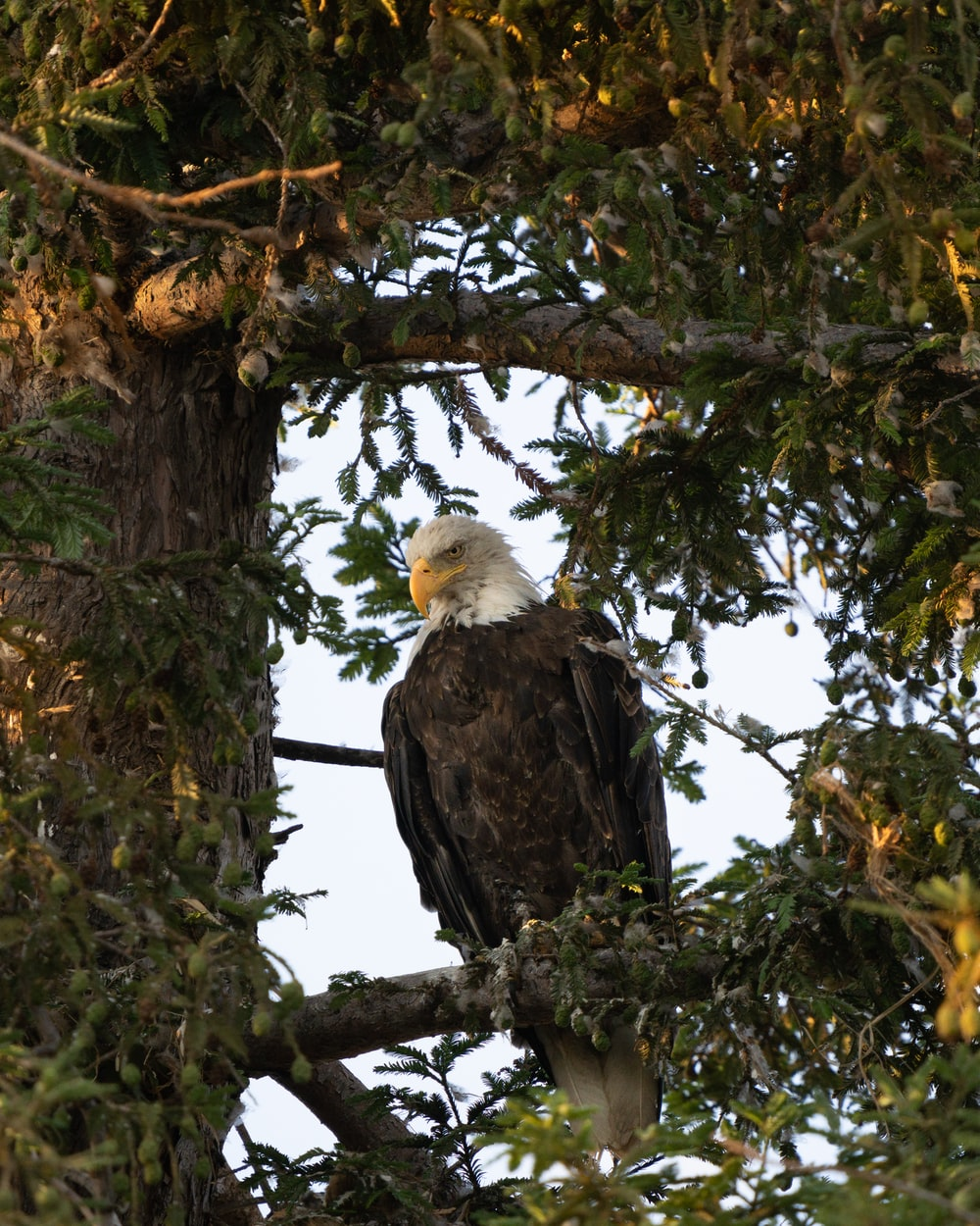 black and white eagle on brown tree