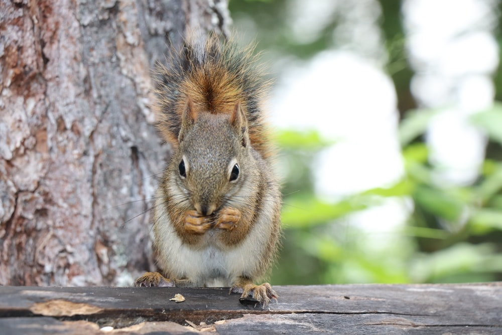brown squirrel on brown wooden tree during daytime