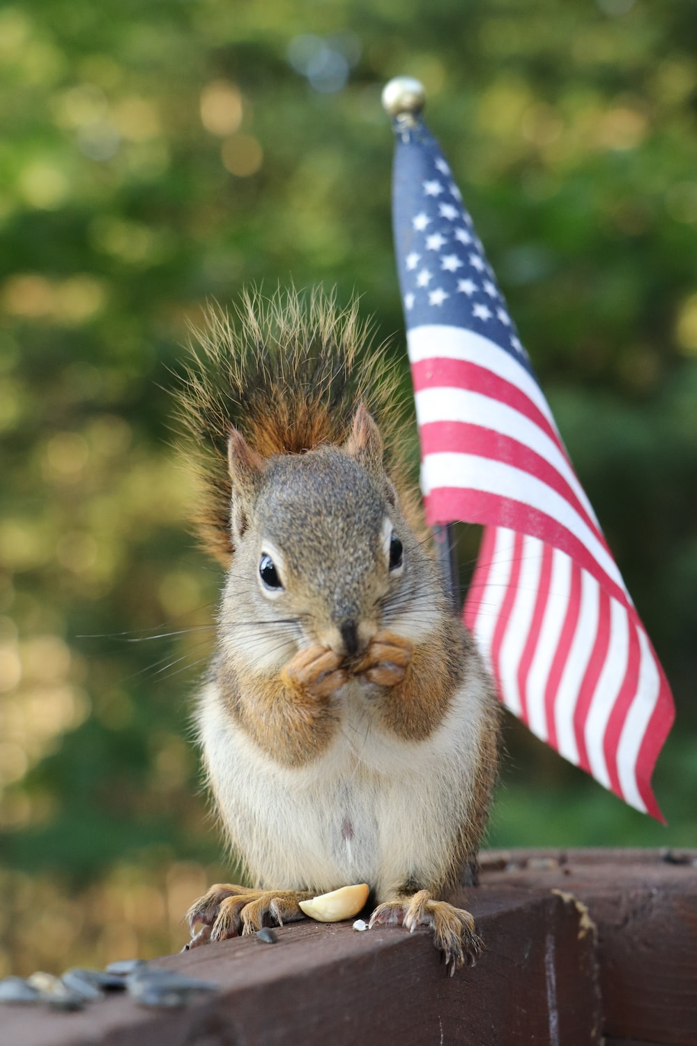 brown squirrel holding us a flag