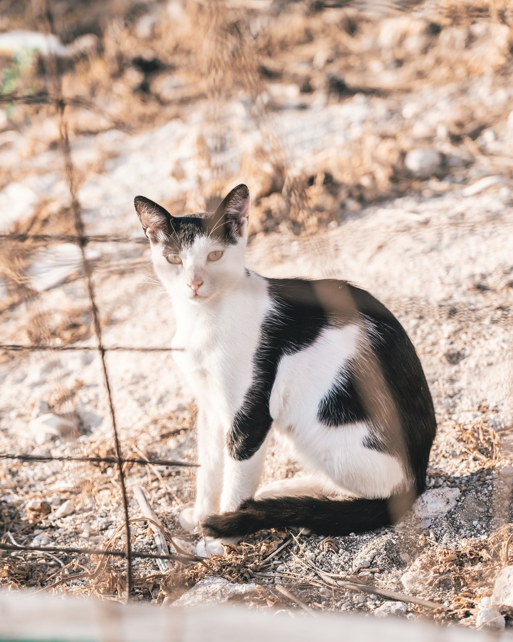 white and black cat on brown ground