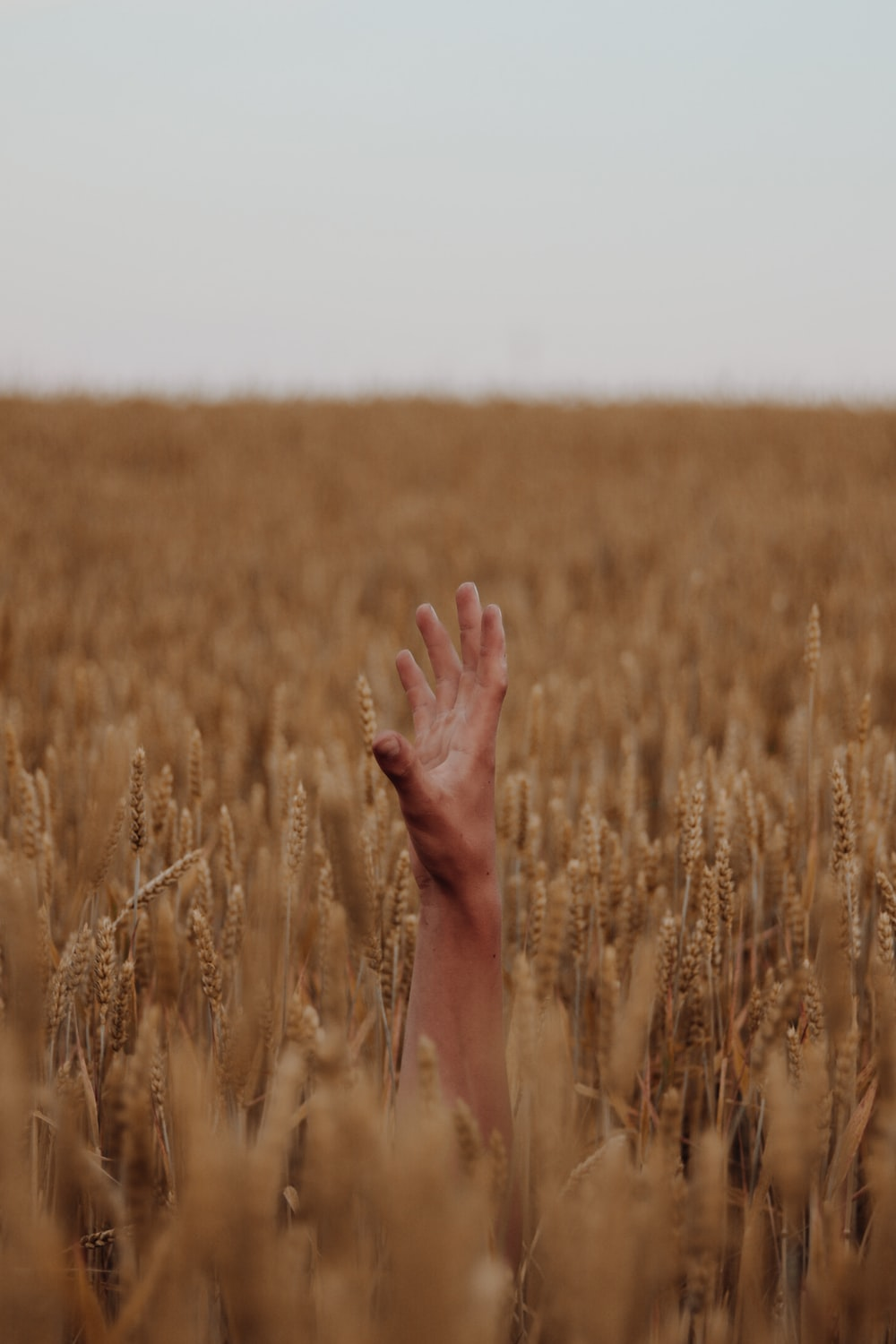 persons left hand on brown wheat field during daytime