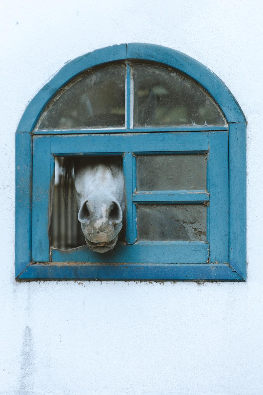 white short coated dog in blue window