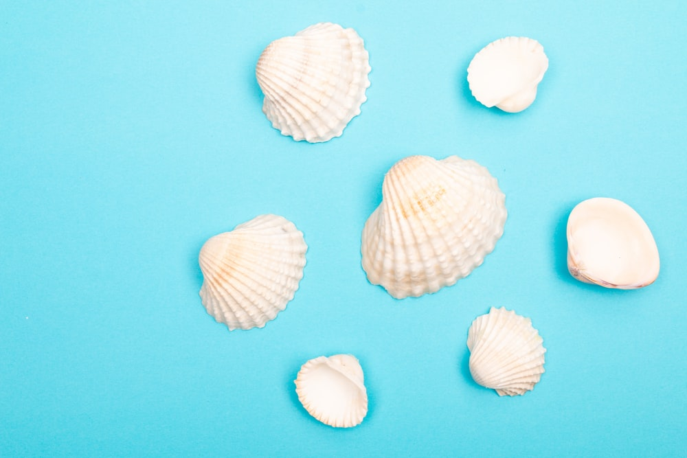 white and brown seashell on blue surface