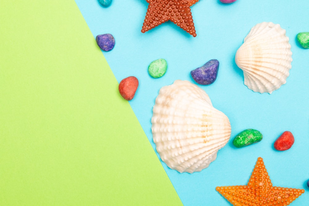white and pink seashells on pink and white star print board
