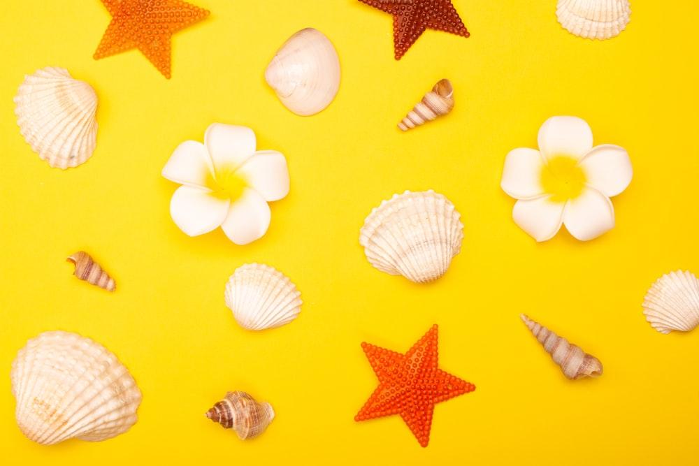 white and yellow seashells on yellow star print textile