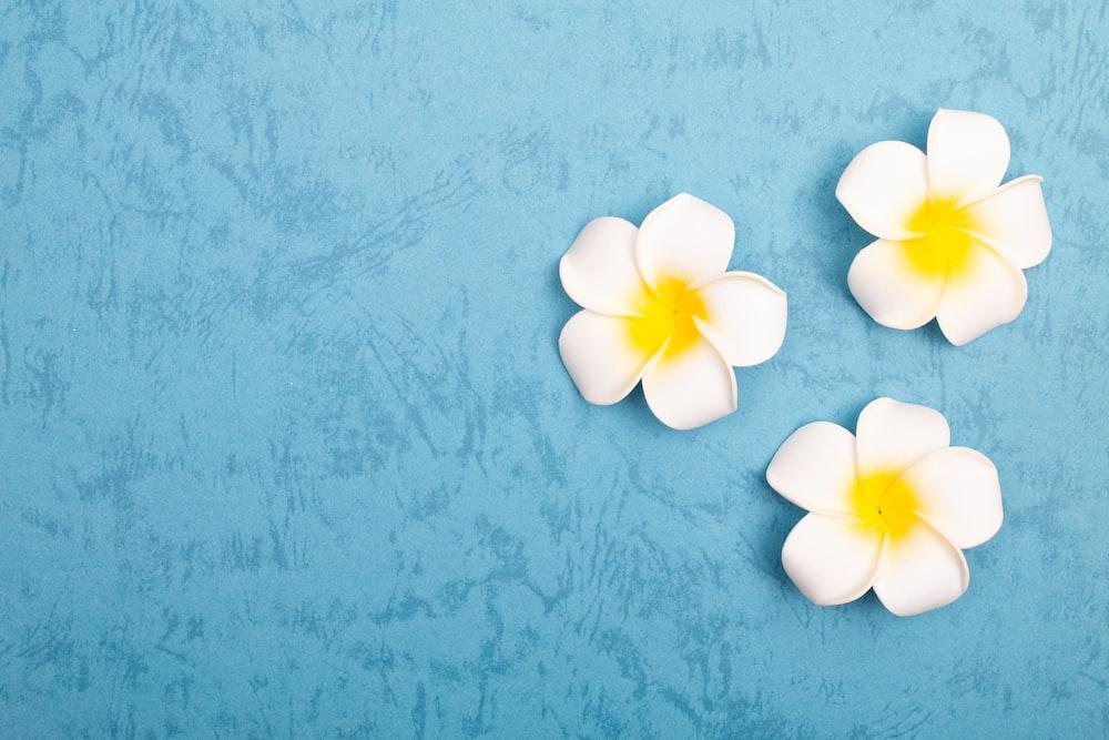 white 5 petaled flower on blue surface