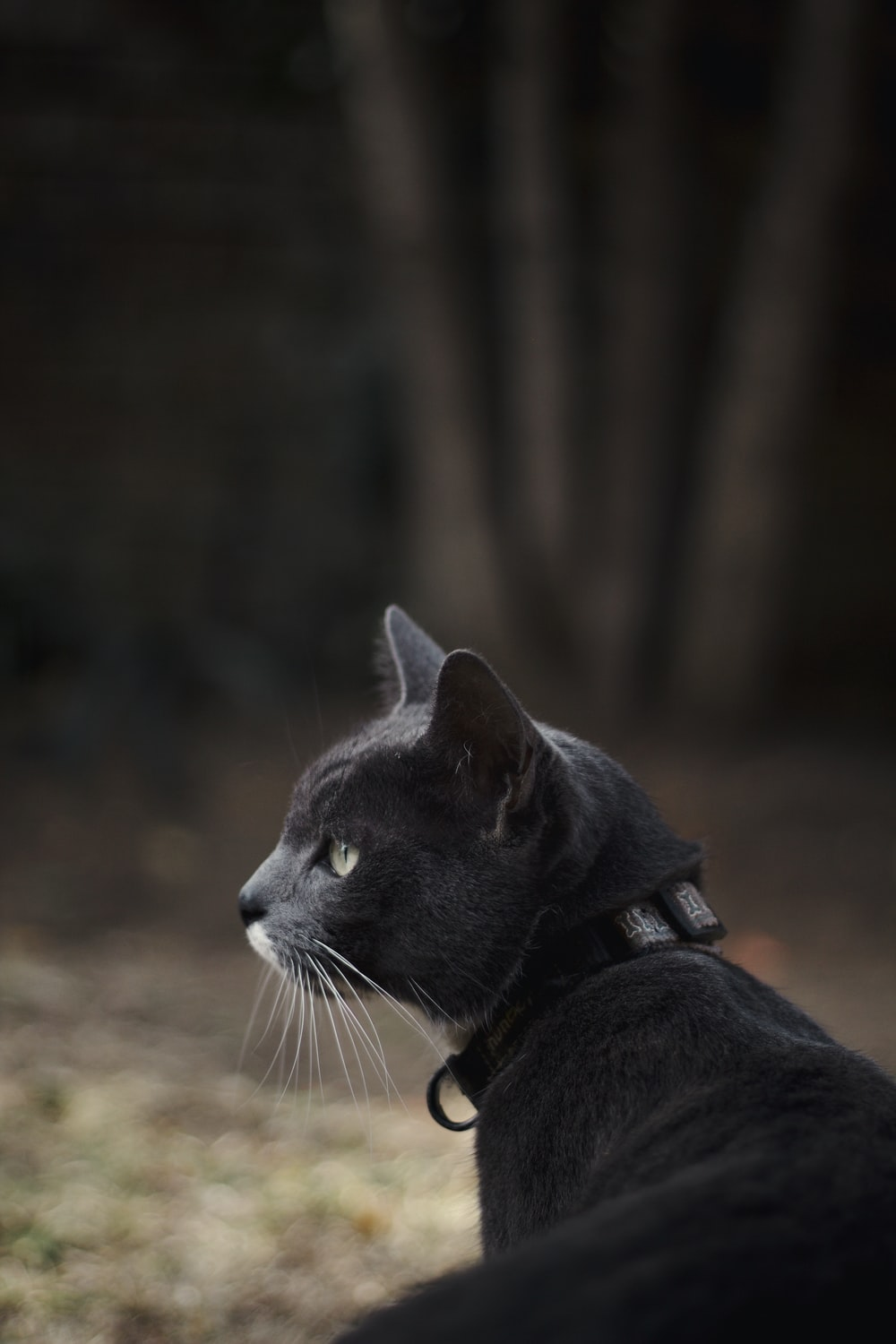 black and white cat on brown ground