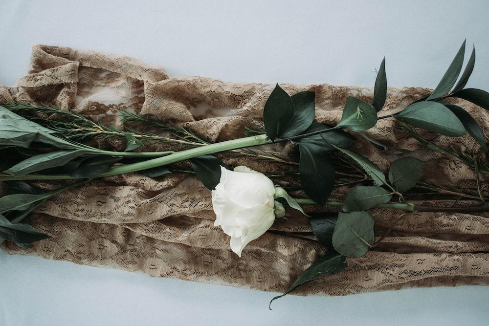 white rose on brown rock