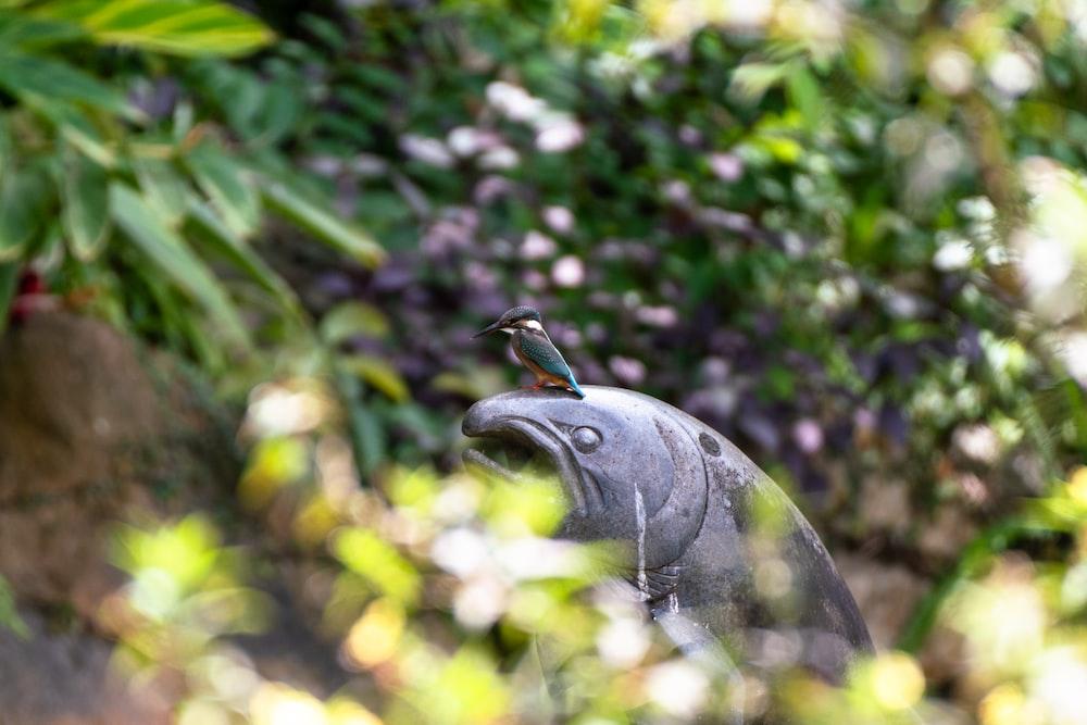 grey bird on tree branch during daytime