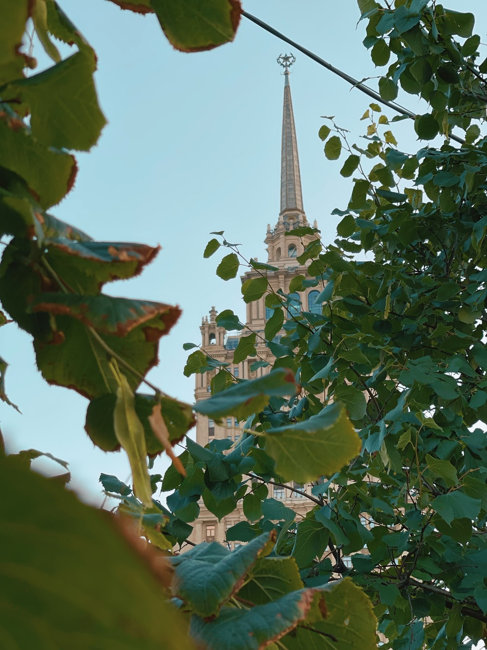 green leaves and white tower