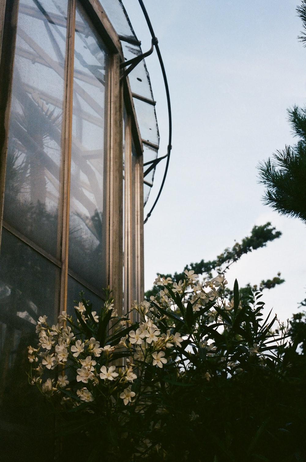 green tree near glass window