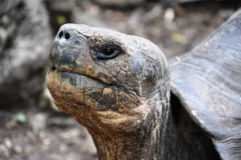 brown and black turtle on brown soil