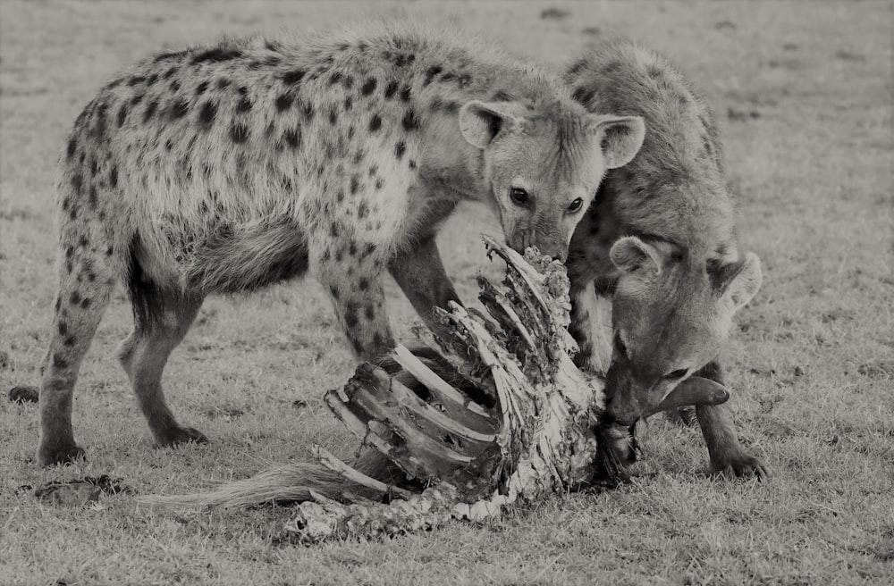 grayscale photo of 4 legged animals