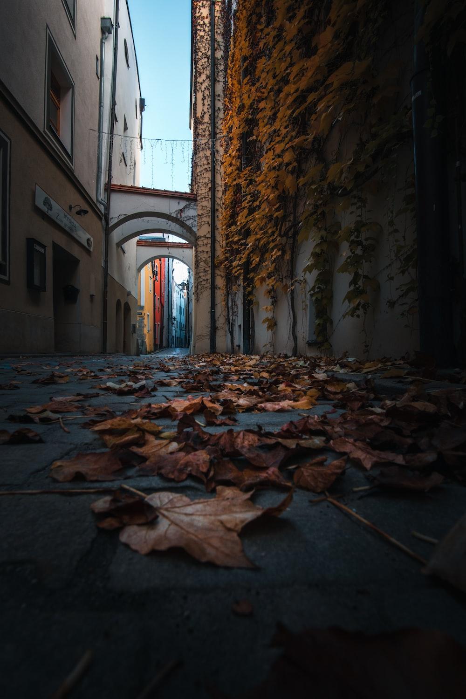 brown dried leaves on hallway