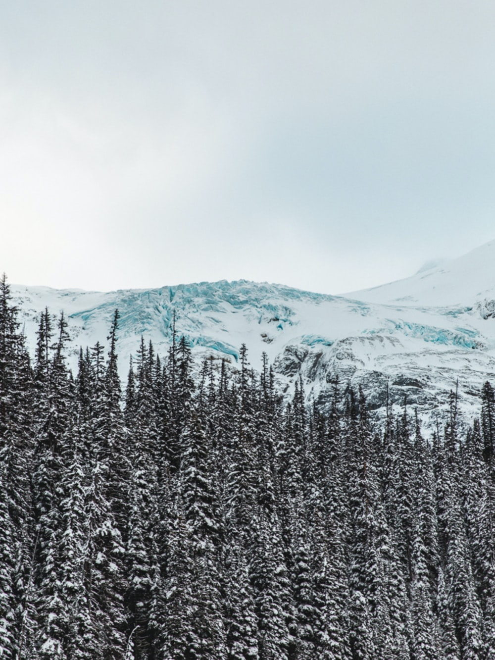 snow covered pine trees and mountains during daytime