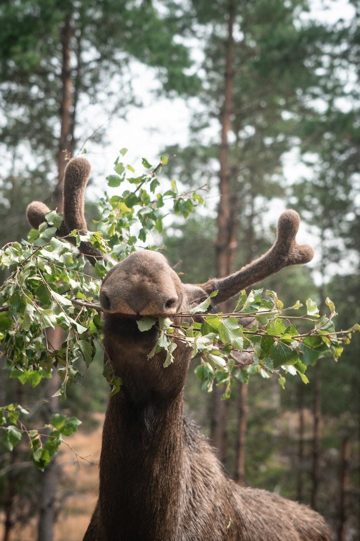 brown bear on brown tree branch during daytime