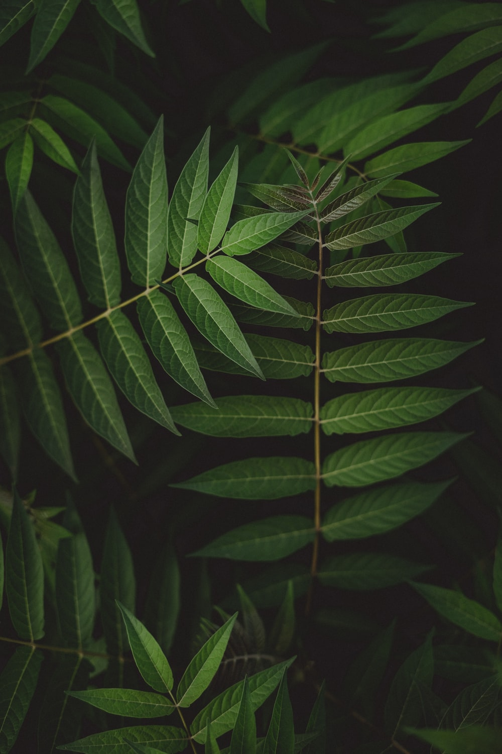 green leaves in close up photography